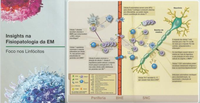Fisiopatologia da Esclerose Múltipla (Foco nos Linfócitos)